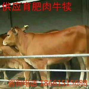 现在小牛犊的价格多少钱
