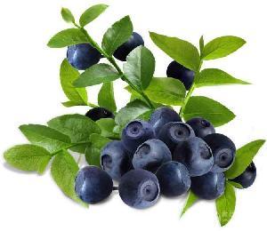 蓝莓粉 蓝莓提取物