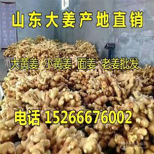 山东生姜姜种多钱一斤