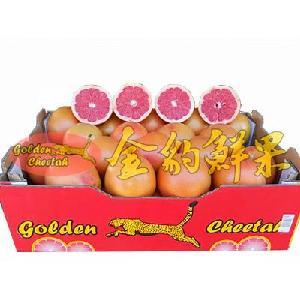 新鲜进口水果南非金豹西柚葡萄柚批发奶茶餐饮店水果汁专用