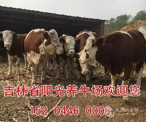 平邑哪里有养牛基地