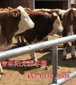 中国*的养牛基地