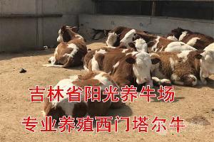 一头小牛犊多少钱
