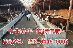 养牛补贴政策2017