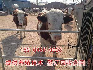 育肥牛全价料