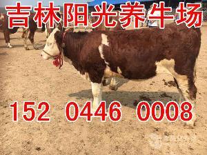 四川阆中养牛基地