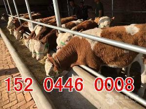小奶牛多少钱一头