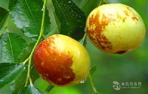 大个皮薄鲜梨枣