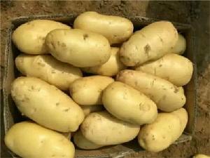 今年的山东省土豆产地批发价格是多少