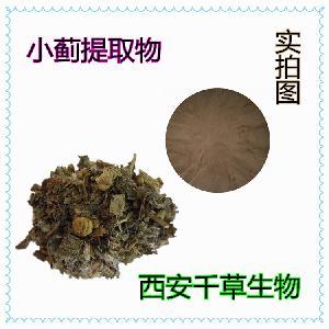 小蓟提取物 药食同源厂家生产动植物提取物小蓟浓缩粉纯浸膏