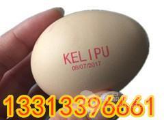 江苏高速整盘鸡蛋喷码机多少钱,科力普鸡蛋喷码机KP-19
