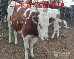 西门塔尔公牛种价钱