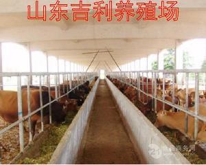 什么地方卖育肥牛犊