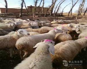 波尔山羊养殖行情