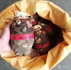 正宗广西香芋 1kg/个
