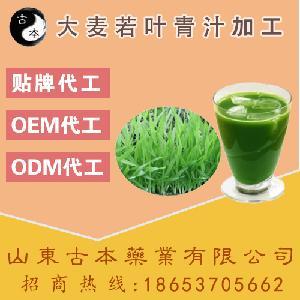 大麦青汁贴牌代工,大麦若叶青汁OEM厂家