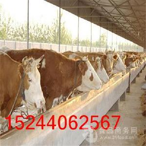 育肥牛的养殖技术