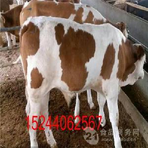 卖育肥牛牛犊价格