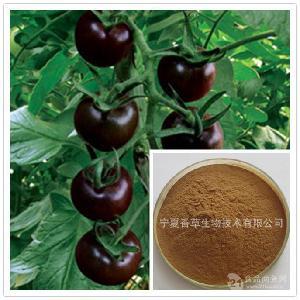 黑番茄提取物20:1规格定制黑番茄粉 黑番茄浸膏粉 黑番茄速溶粉