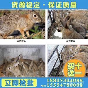 散养野兔用什么围栏网
