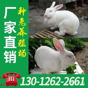 江西獭兔种兔肉兔养殖场