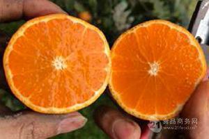 四川自贡哪有明日见柑橘苗,明日见柑橘多少钱