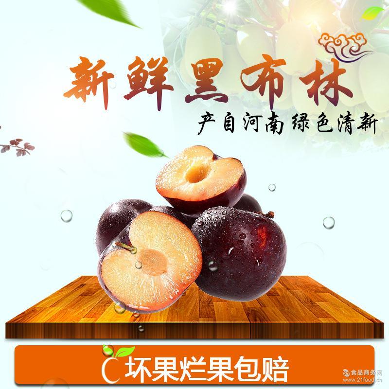 批发西峡黑宝石李子 绿色无添加水果单果约100g 国产新鲜水果