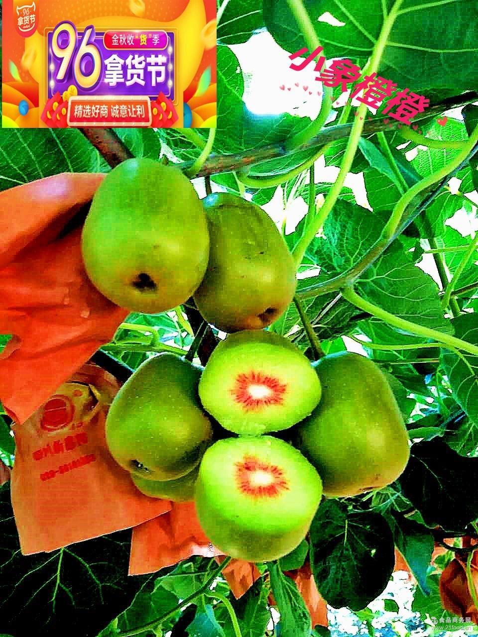 香甜多汁包邮 四川正宗蒲江红心猕猴桃 果园现采现发新鲜孕妇水果