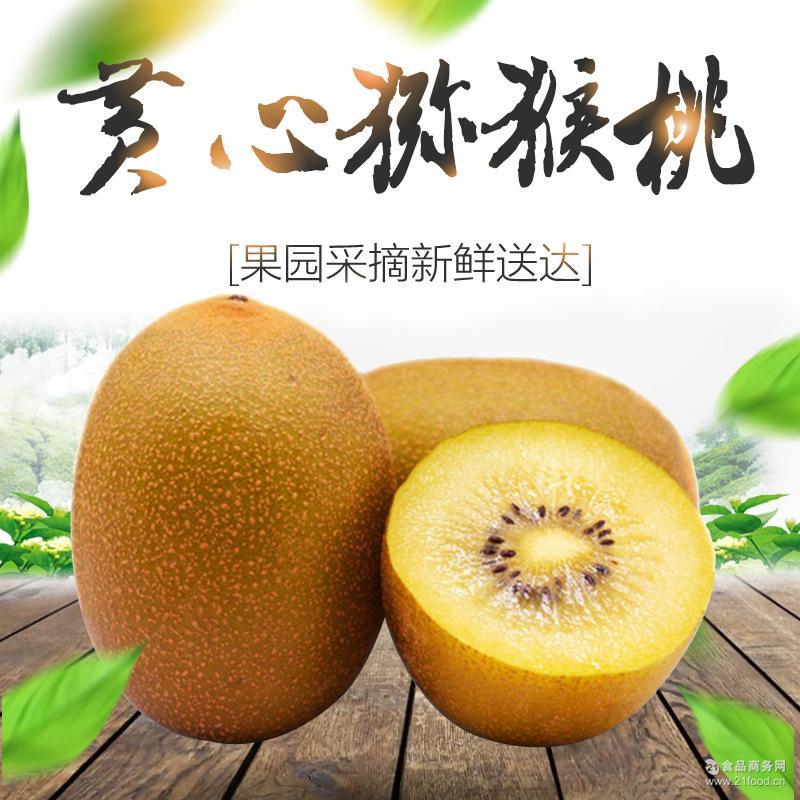 新鲜水果 黄心猕猴桃 一件代发黄心奇异果现货发售