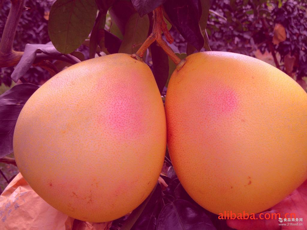 三红肉蜜柚订购水果早熟鲜甜价格可包邮快递 大量批发