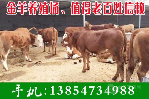 3个月牛犊价格