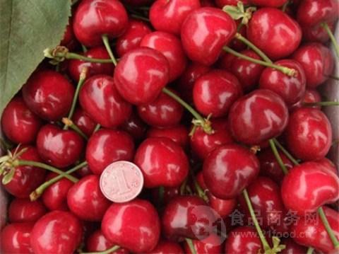 大樱桃产地在哪里 今年的山东省大樱桃产地价格