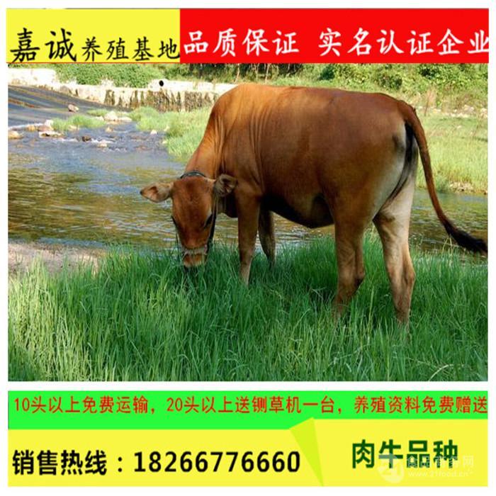 安徽省肉牛养殖场