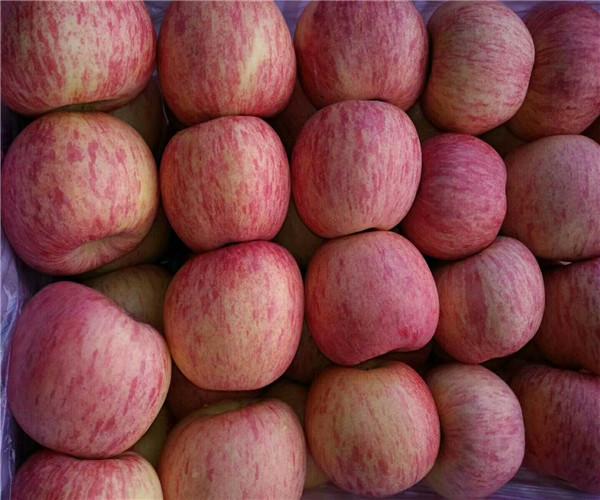 纸袋美八苹果