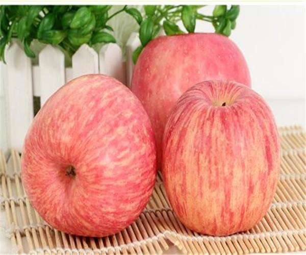 山东红富士苹果多少钱一斤