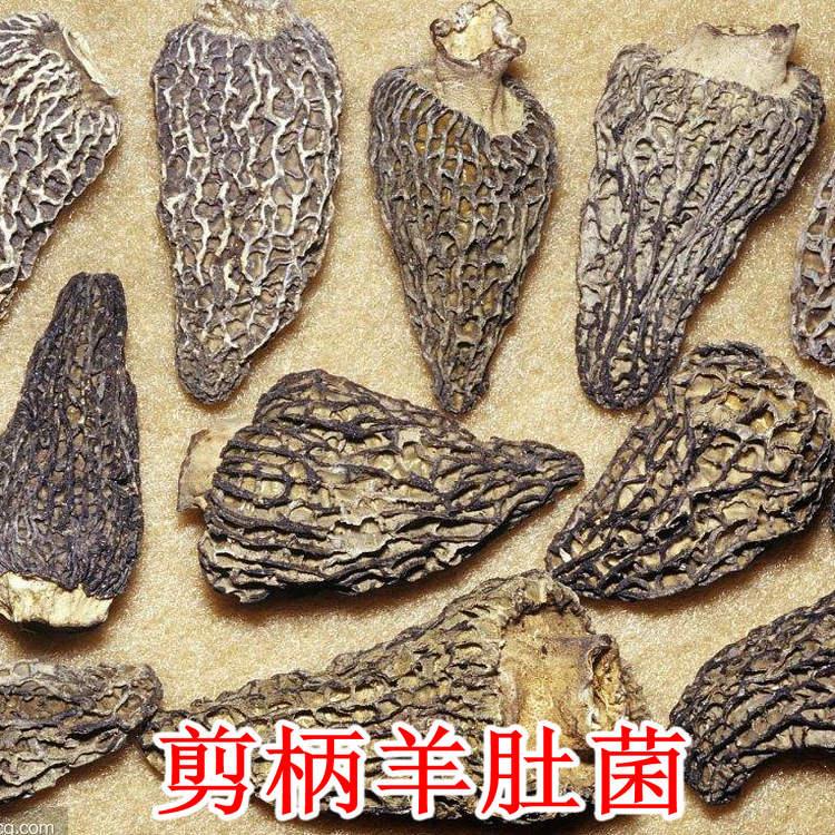 彝山香常年批发剪柄羊肚菌4-6CM云南野生菌羊肚菇干货供应