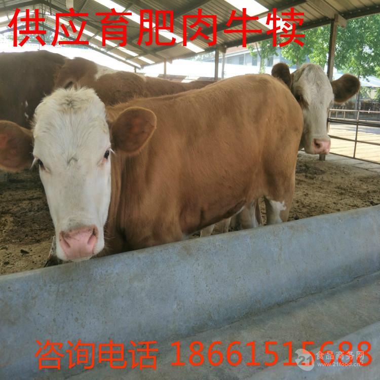 肉食牛犊多少钱