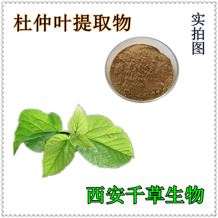 杜仲叶水溶粉 厂家生产动植物提取物定做浓缩浸膏