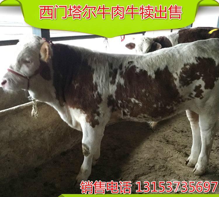 现代化肉牛养殖场