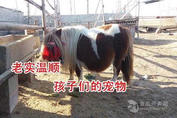 小矮马养殖场矮马出售多少钱一匹