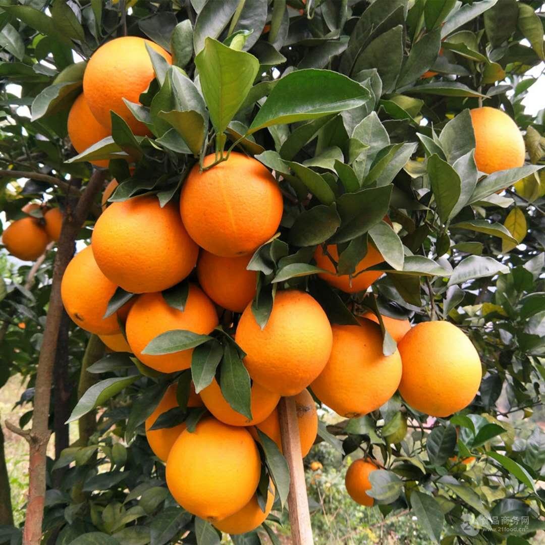 江西正宗赣南脐橙招代理团购批发自家果园赣南橙子好吃香甜多汁