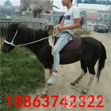 销售骑乘小矮马价格