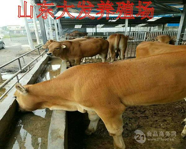 曲靖养牛场