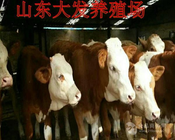 哪有养牛场