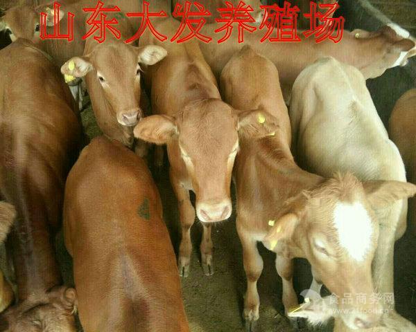 铜川养牛场多吗