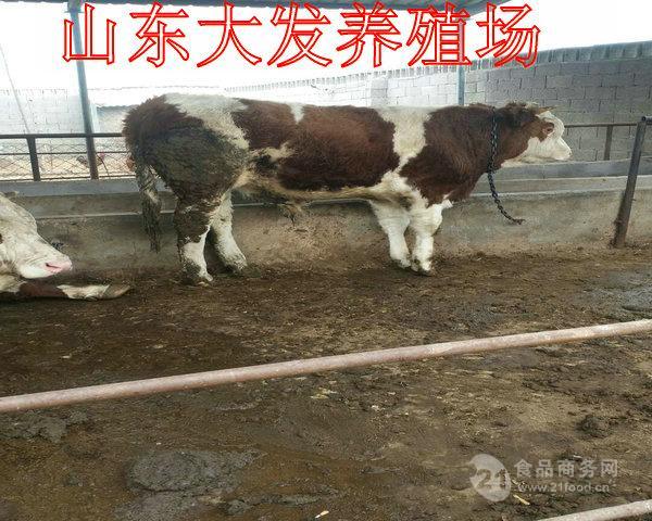 养牛场投资多大