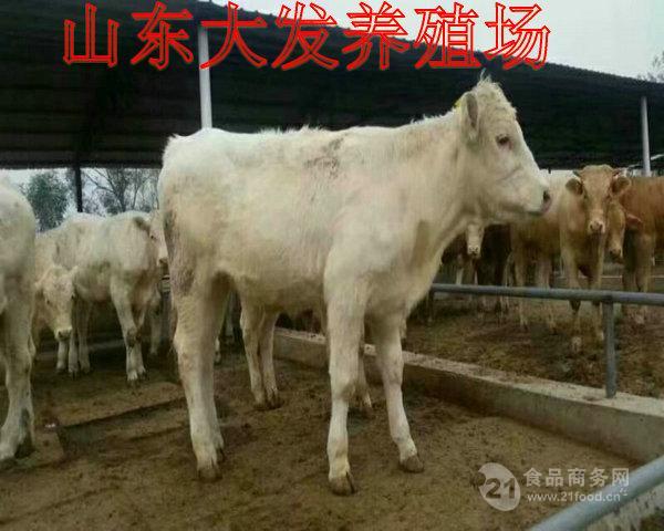 四川绵阳养牛基地