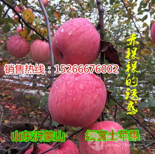 山东红富士苹果产地销售价格