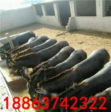 肉驴养殖的利润有多大