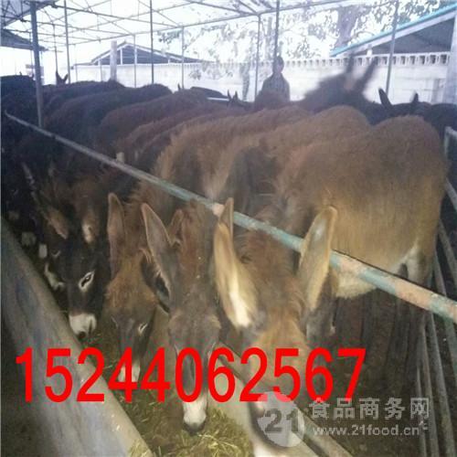 重庆大型养驴场